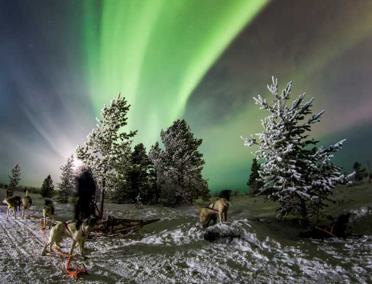a husky ride with the northern lights